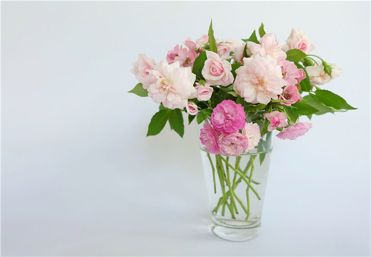 These flowers are more suitable for holding in glass vases