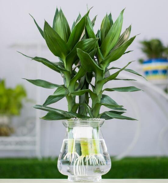 Những bông hoa này thích hợp để đựng trong lọ thủy tinh hơn